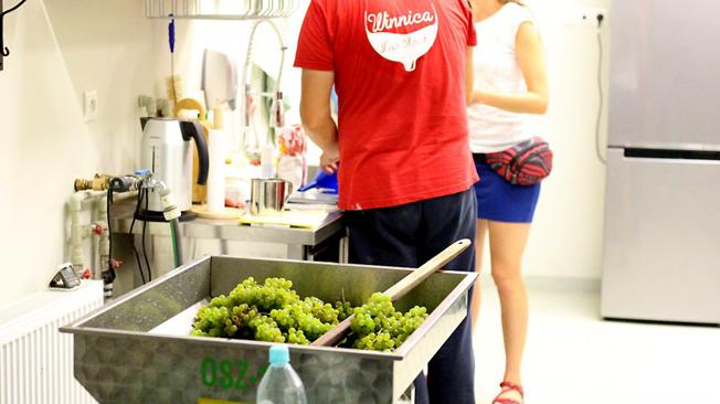 Odszypułkowarka, podstawowa nasza maszyna w winiarni