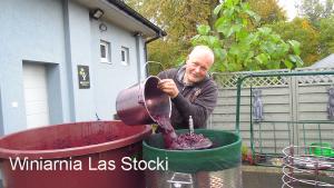 Winnica Las Stocki tłoczenie Regenta